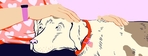 What Animals Can Give: Animal Therapy to Cope with Dementia image